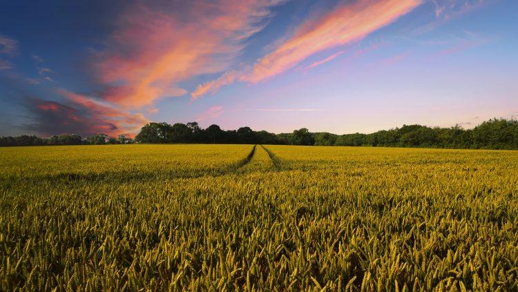 Investeringen landbouwbedrijf